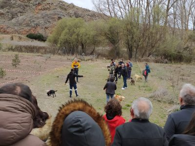 Celebrada la undécima Feria de la Trufa de Molina de Aragón